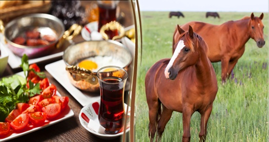 Sarıyer Hasat Çiftlik'te at gezisi ve sınırsız çay eşliğinde kahvaltı 50 TL! Fırsatın geçerlilik tarihi için DETAYLAR bölümünü inceleyiniz.