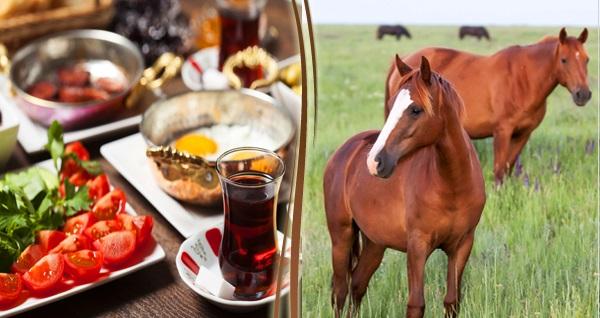Sarıyer Hasat Çiftlik'te at gezisi ve sınırsız çay eşliğinde kahvaltı 45 TL'den başlayan fiyatlarla! Fırsatın geçerlilik tarihi için DETAYLAR bölümünü inceleyiniz.