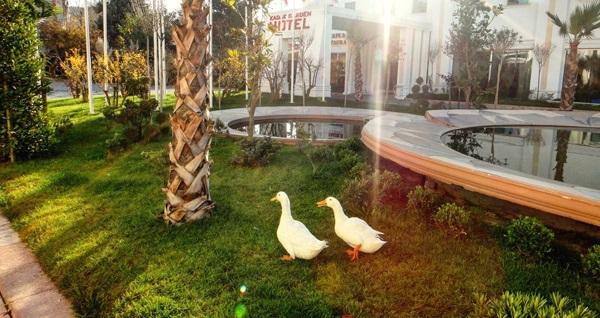 Bahçelievler Yenibosna Kadak Garden Hotel'de kahvaltı keyfi 29,90 TL! Fırsatın geçerlilik tarihi için DETAYLAR bölümünü inceleyiniz.