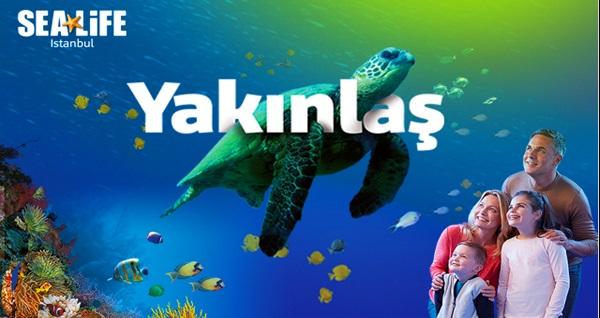 Sea Life İstanbul için giriş biletleri 31 TL'den başlayan fiyatlarla! Fırsatın geçerlilik tarihi için DETAYLAR bölümünü inceleyiniz.