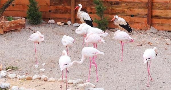 Çekmeköy Park Of İstanbul'da hayvanat bahçesi, piknik ve macera parkı için giriş biletleri kişi başı! Fırsatın geçerlilik tarihi için, DETAYLAR bölümünü inceleyiniz.