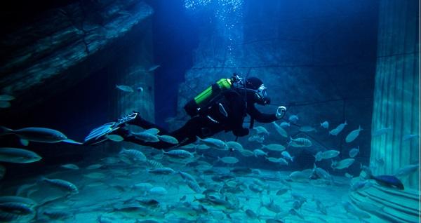 İzmir'in ilk ve tek akvaryumu Funtastic Aquariums İzmir için giriş biletleri 35 TL'den başlayan fiyatlarla! Fırsatın geçerlilik tarihi için DETAYLAR bölümünü inceleyiniz.