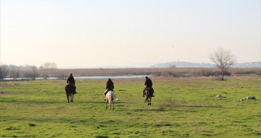 Nilüfer Atlı Spor Kulübü'nde rehber eşliğinde atlı doğa gezisi 74,90 TL! Fırsatın geçerlilik tarihi için DETAYLAR bölümünü inceleyiniz.