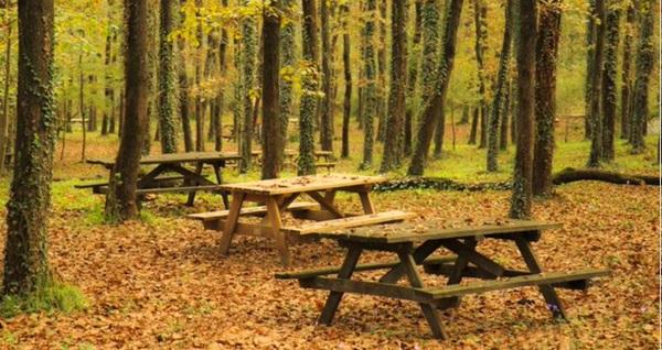 Avcıkoru Tabiat ve Macera Parkı'nda tabakta ve serpme kahvaltı seçenekleri 34,90 TL'den başlayan fiyatlarla! Fırsatın geçerlilik tarihi için DETAYLAR bölümünü inceleyiniz.