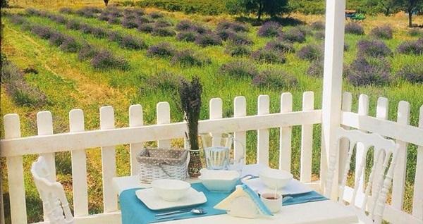 Isparta Kuyucak Köyü Aliya Garden Köy Evi ve Lezzetleri Butik Otel'de çift kişilik 1 gece konaklama seçenekleri 239 TL'den başlayan fiyatlarla! Fırsatın geçerlilik tarihi için, DETAYLAR bölümünü inceleyiniz.