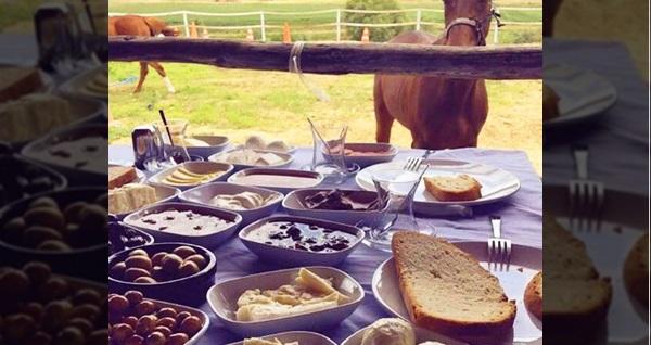Avcılar Binicilik'de at binme ve serpme kahvaltı kişi başı 30 TL'den başlayan fiyatlarla! Fırsatın geçerlilik tarihi için DETAYLAR bölümünü inceleyiniz.