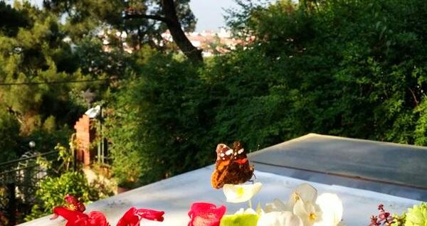 Büyükada KöşkOrman'da zengin içerikli serpme kahvaltı keyfi 50 TL yerine 29,90 TL! Fırsatın geçerlilik tarihi için DETAYLAR bölümünü inceleyiniz.