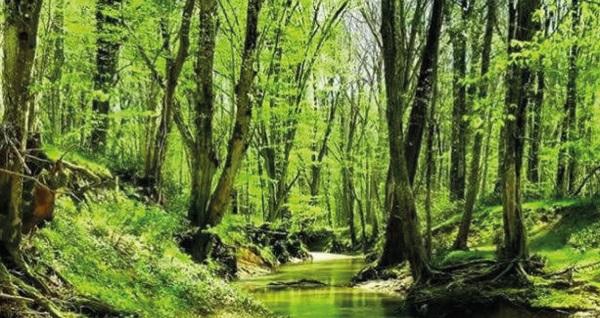 Trakya'nın renkli doğası sizi bekliyor! Günübirlik İğneada & Dupnisa Mağarası & Longoz Ormanları turu kişi başı 100 TL! Tur kalkış tarihleri için, DETAYLAR bölümünü inceleyiniz.