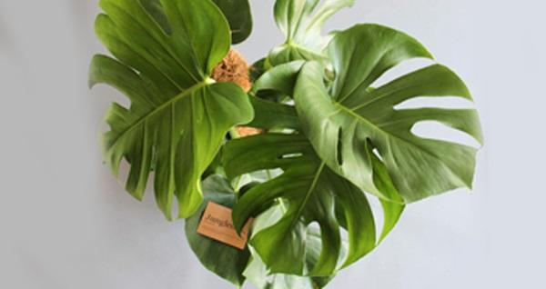 Jungleous ile farklı saksı çeşitleri ve evlerinizi güzelleştirecek dekorasyon ürünleri!