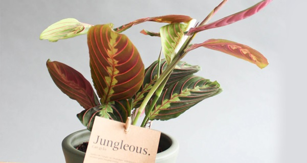 Jungleous ile farklı saksı çeşitleri ve evlerinizi güzelleştirecek dekorasyon ürünleri! Fırsatın geçerlilik tarihi için DETAYLAR bölümünü inceleyiniz.
