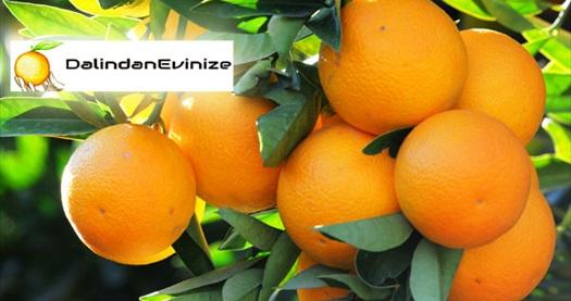 Dalından evinize'den yapacağınız 10 kg'lık organik portakal alışverişlerinizde geçerli %20 indirim sağlayan çek 2 TL! Fırsatın geçerlilik tarihi için, DETAYLAR bölümünü inceleyiniz.