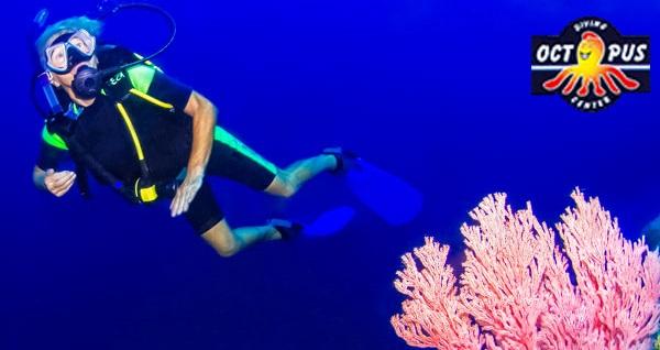 Kemer Octopus Dive Center'de tekne turu ile 2 farklı koyda dalış eğitimi ve öğle yemeği 89 TL! Fırsatın geçerlilik tarihi için DETAYLAR bölümünü inceleyiniz.