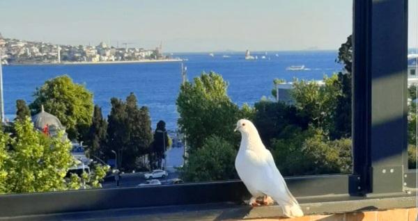 Muhteşem Boğaz manzarası eşliğinde Beşiktaş Balıkçısı By Muzaffer'de lezzet dolu yemek menüsü 79 TL! Fırsatın geçerlilik tarihi için DETAYLAR bölümünü inceleyiniz.